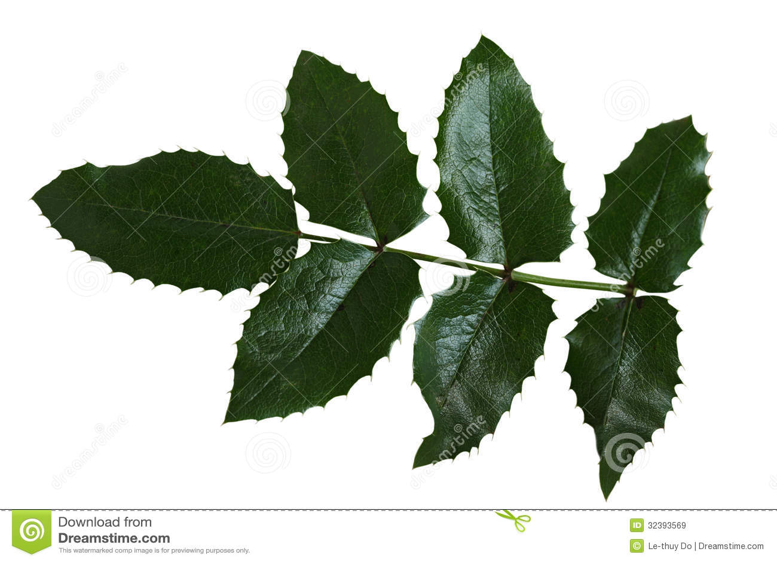 ... pinnate leaves , s...