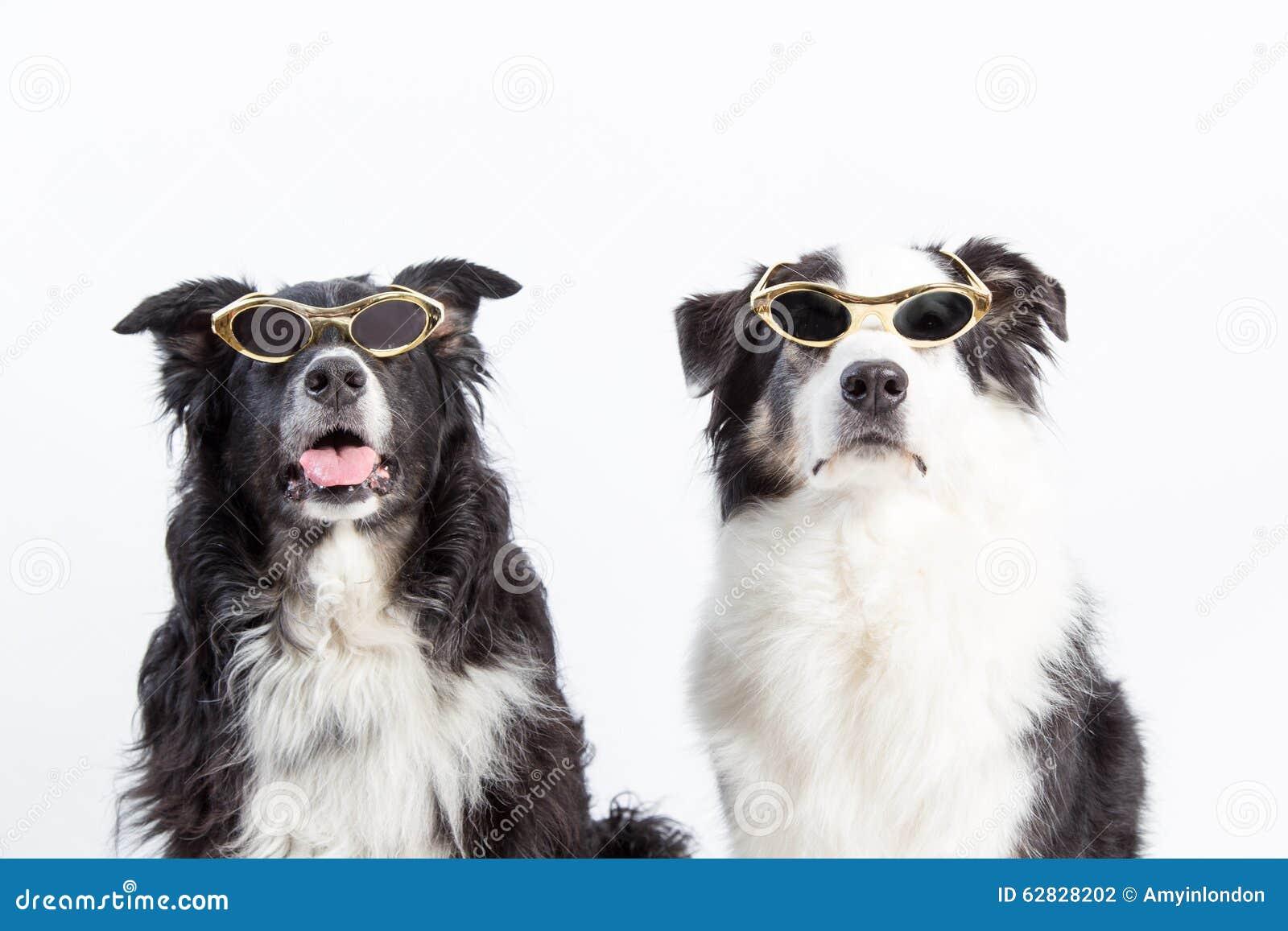 Hollywood hundkapplöpning