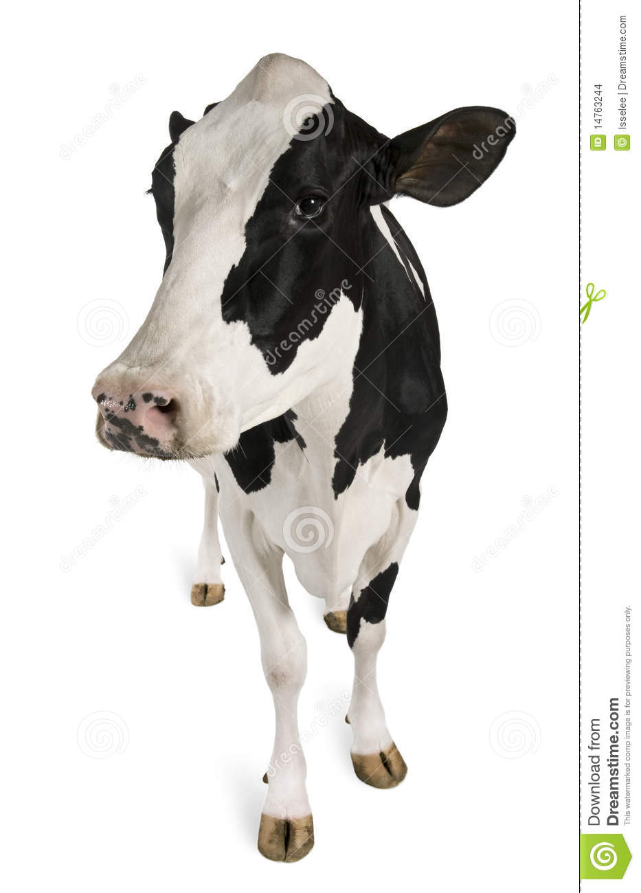 Clipart Cow Udder