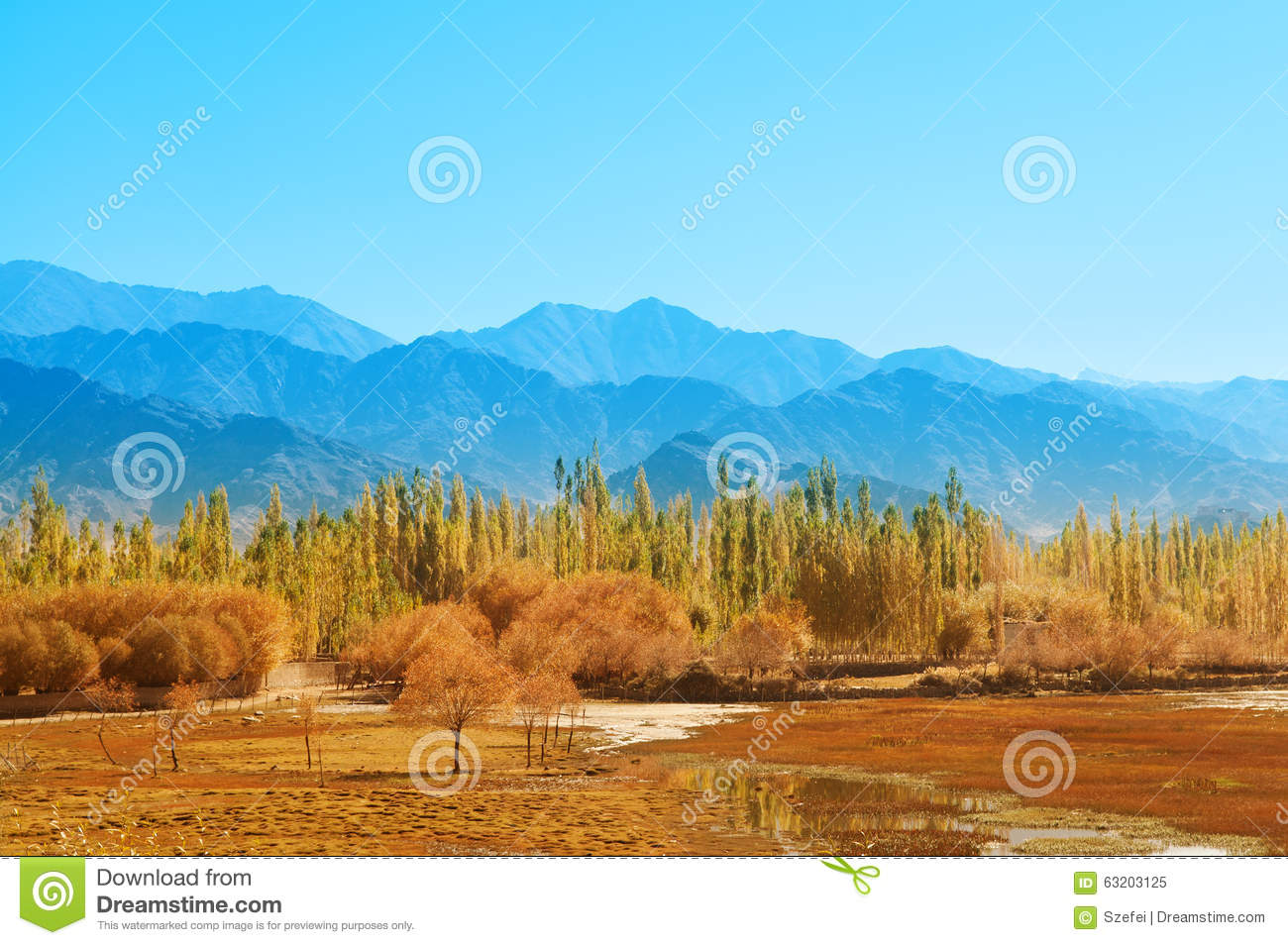 Holy fish pond at shey leh stock photo image 63203125 for Koi pond india