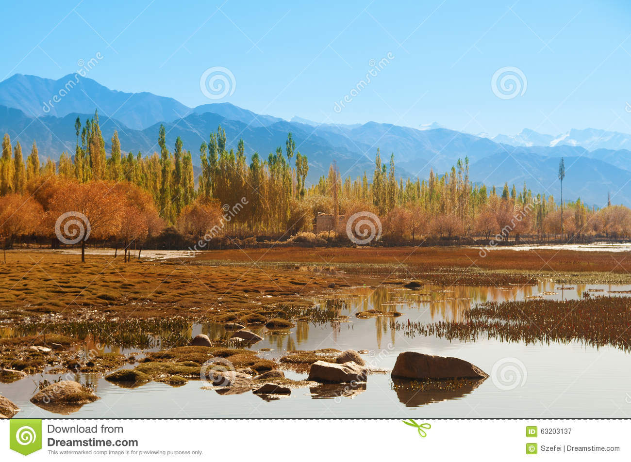 Holy fish pond at shey monastery stock photo image 63203137 for Koi pond india