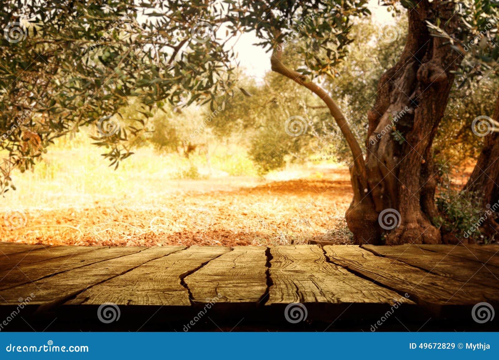 holztisch mit olivenbaum stockfoto bild 49672829. Black Bedroom Furniture Sets. Home Design Ideas