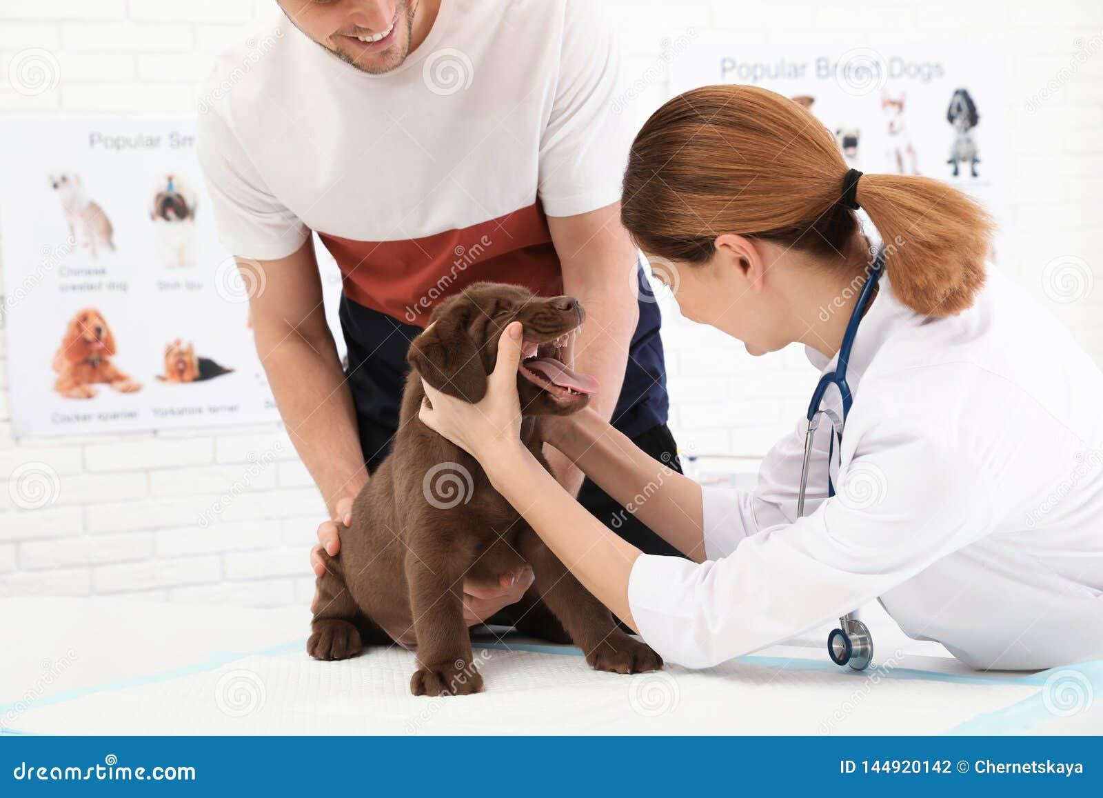 Hombre con su veterinario que visita del animal dom?stico en cl?nica Examen del doc.