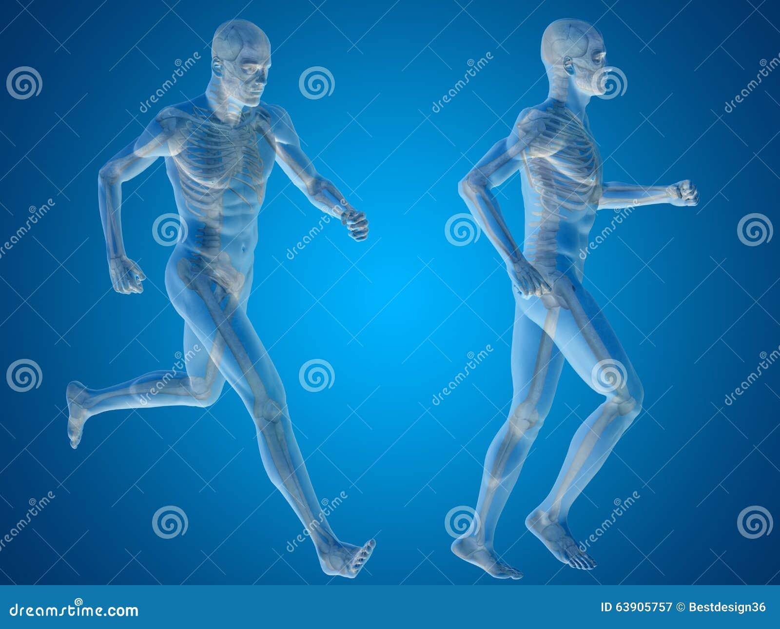 Hombre Conceptual O Anatomía 3D O Cuerpo Humana En Azul Stock de ...