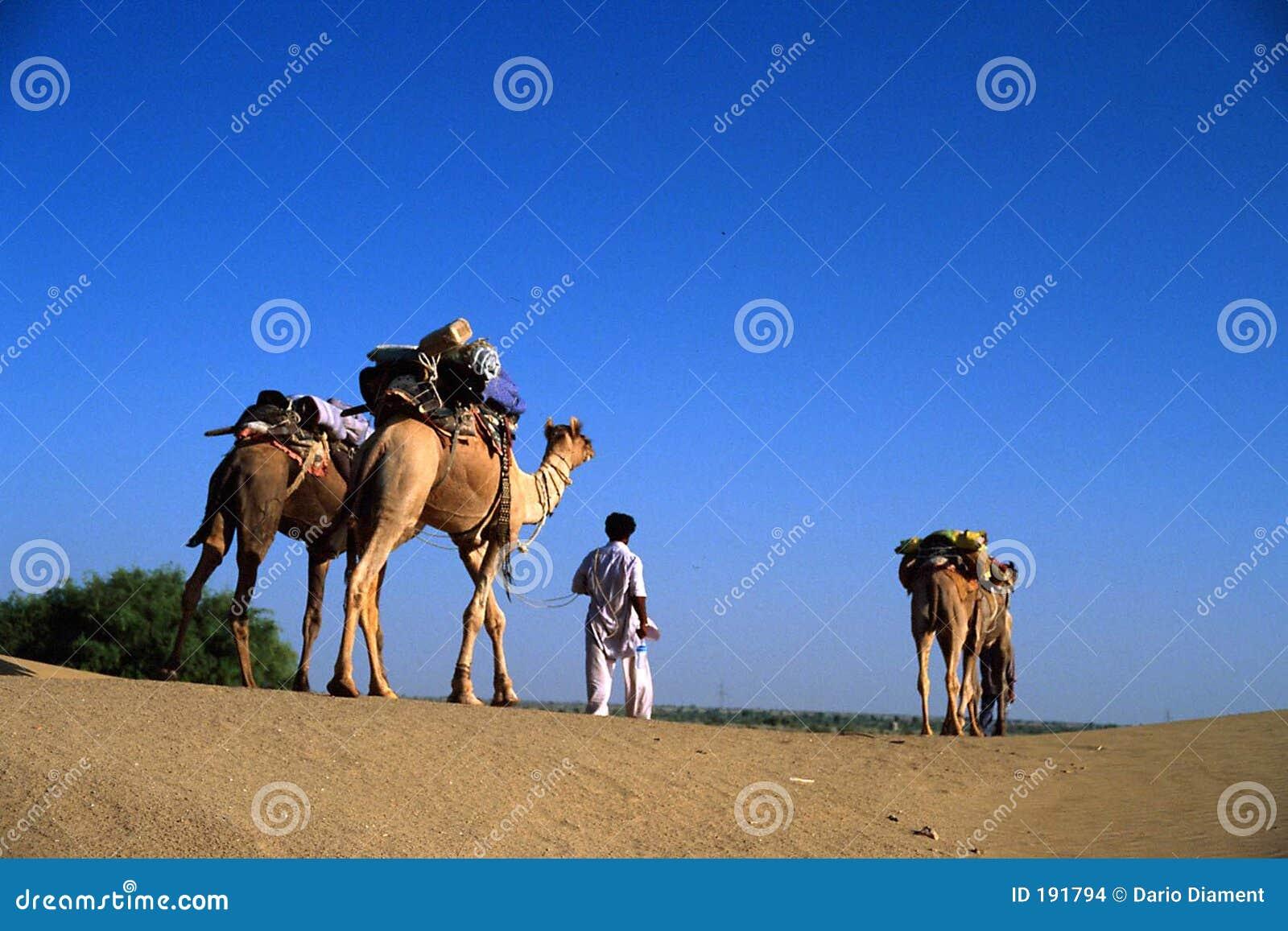 Hombre del camello