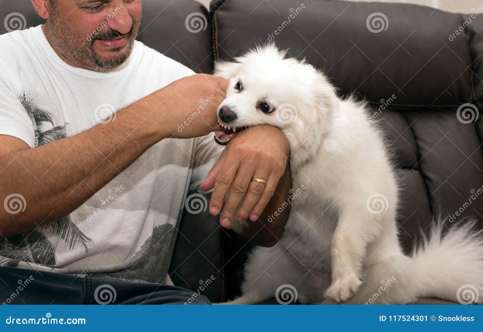 Hombre que es mordido por el perro