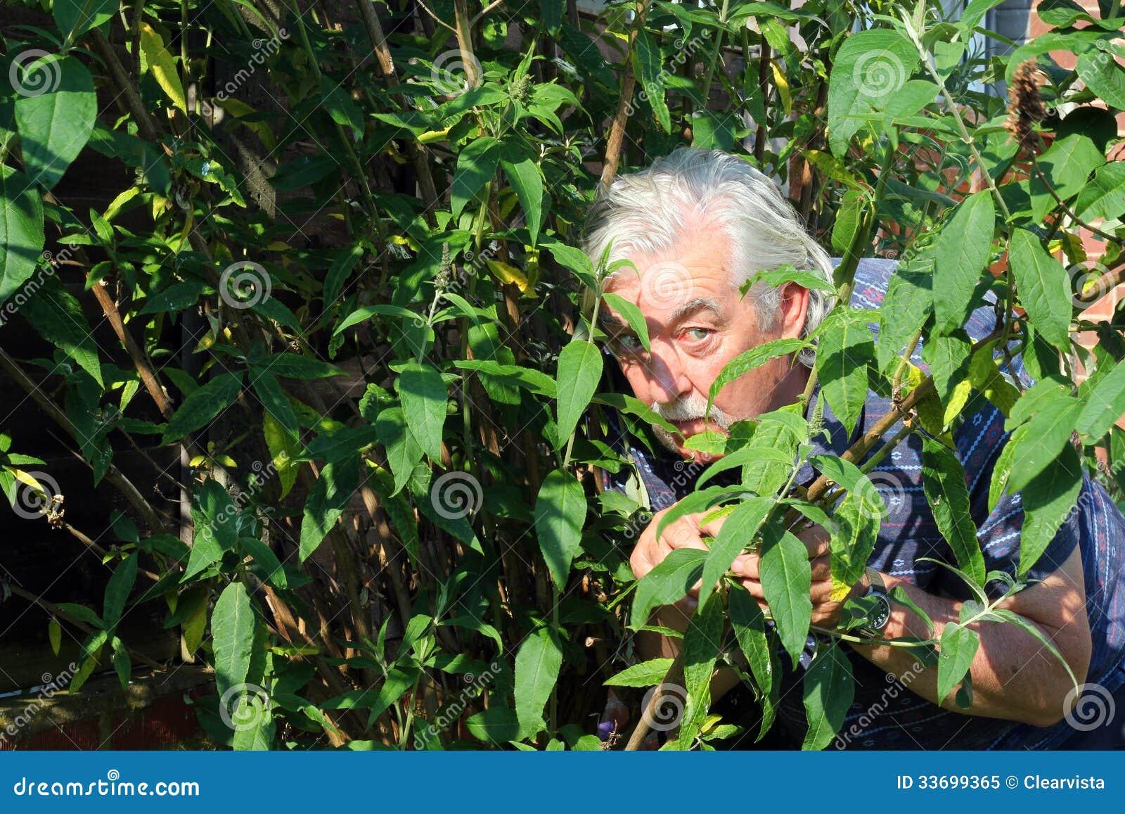 Hombre que oculta en los arbustos.