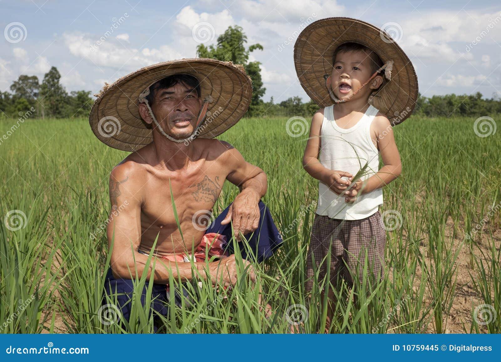 Hombre y niño en el arroz de arroz, Tailandia