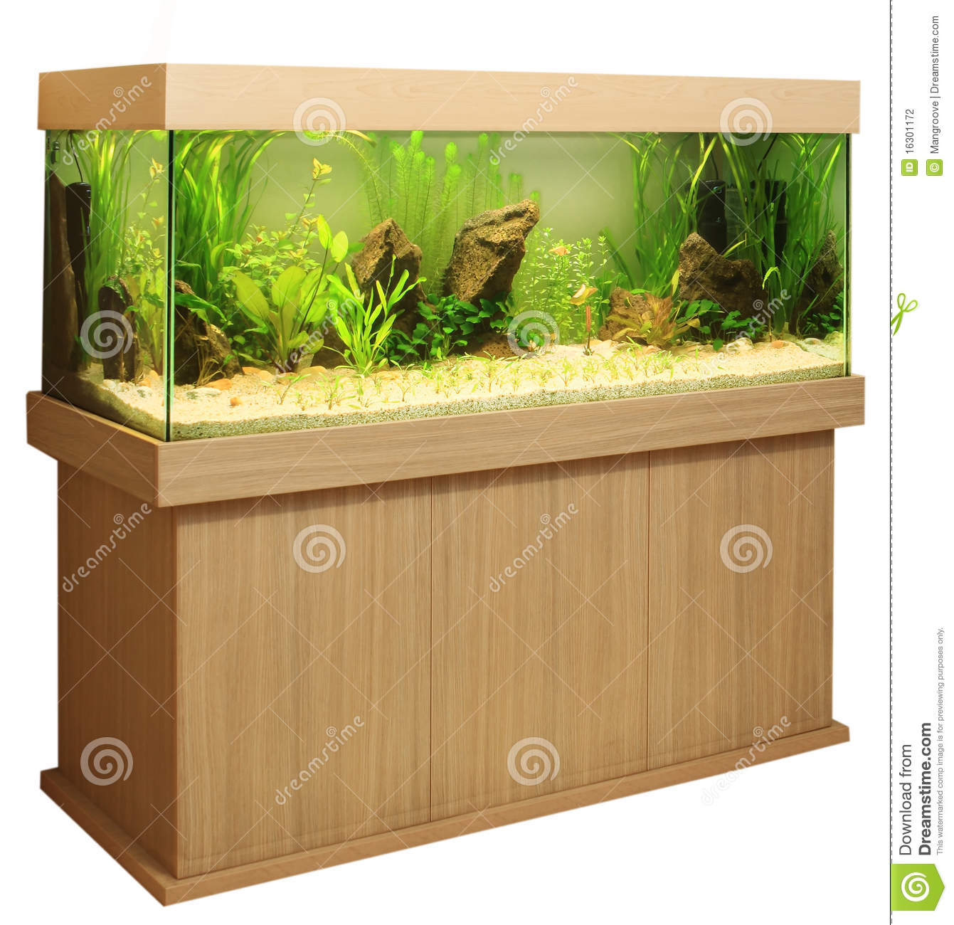 Home Aquarium Stock Photo Image Of Bowl Aquatic