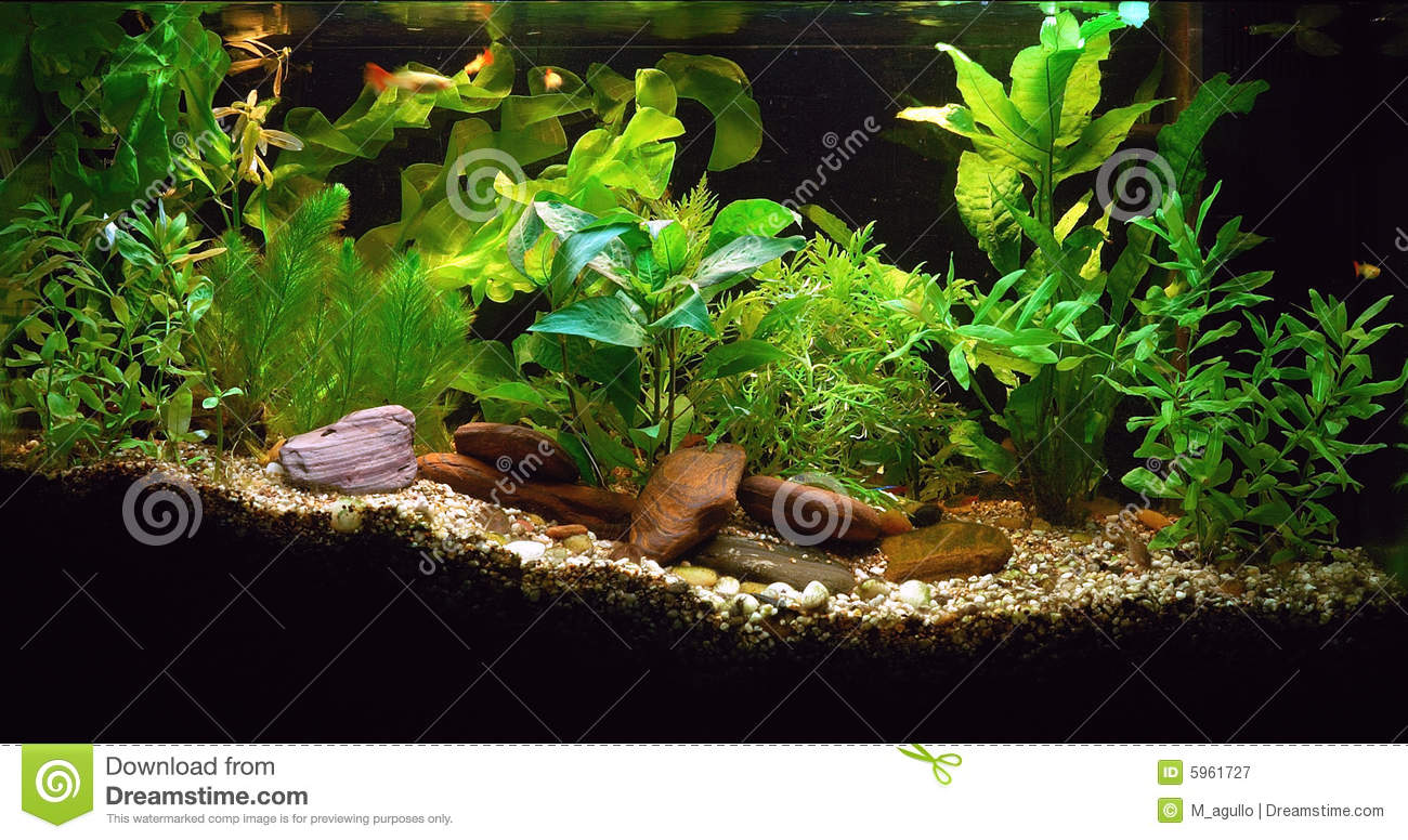 Home Aquarium Royalty Free Stock Photography - Image: 5961727