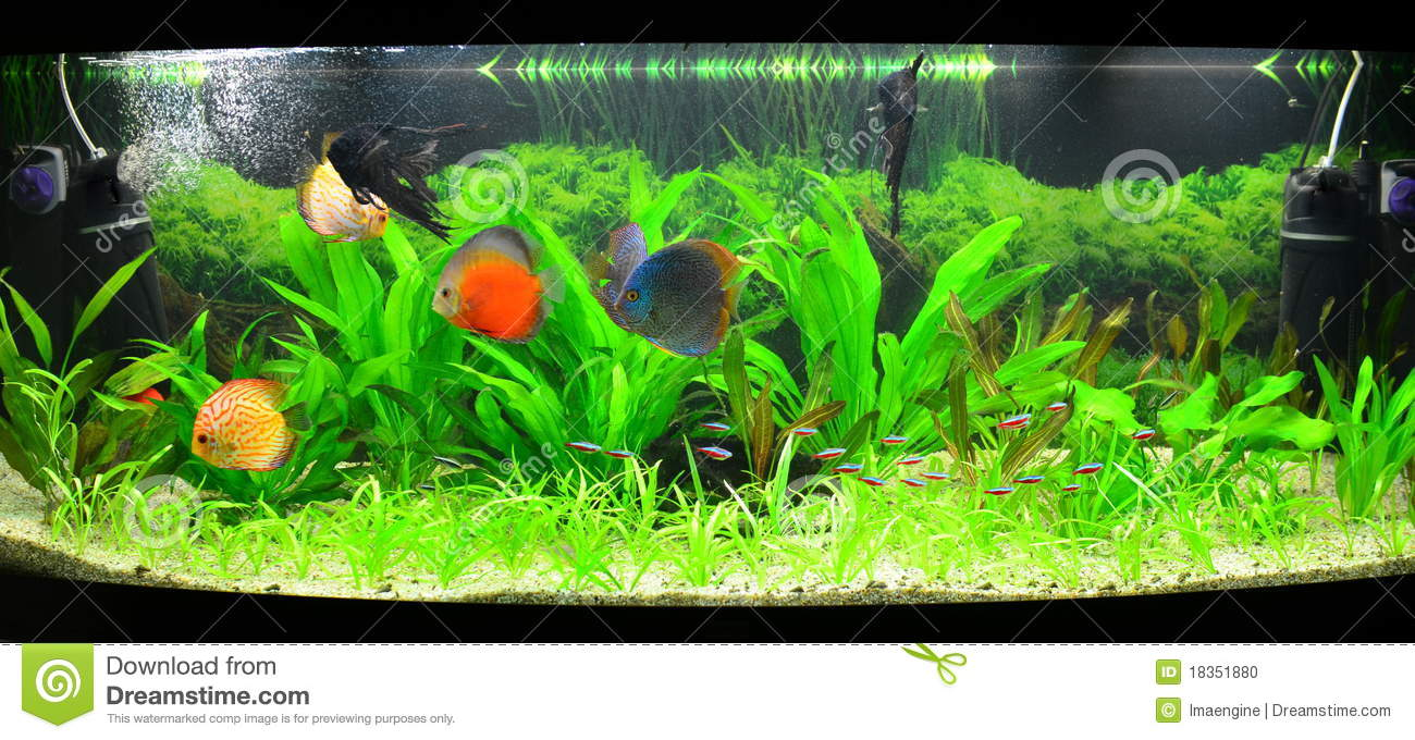 Home Aquarium With Discus Fish And Plants Stock Photo - Image ...