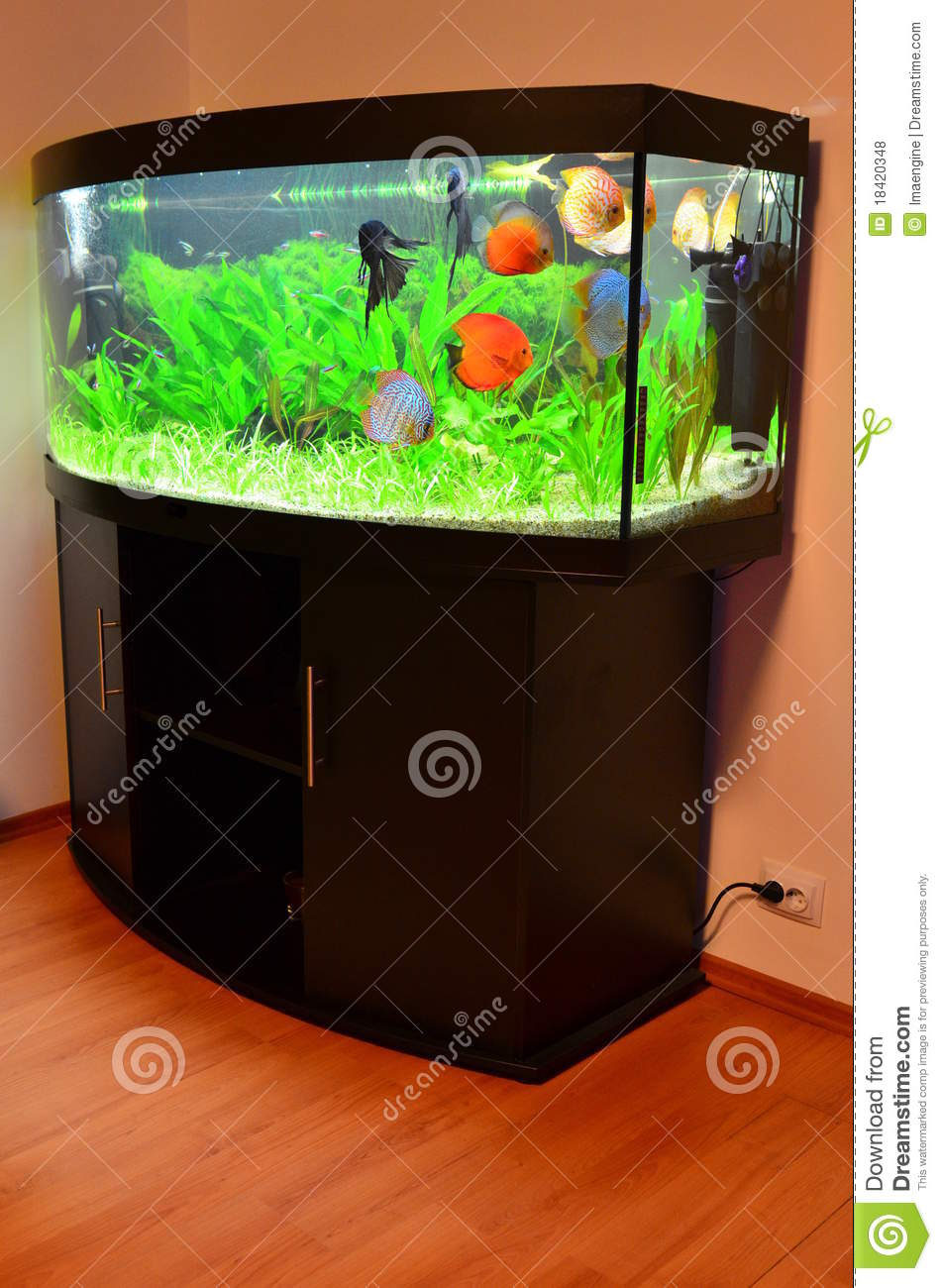 Home aquarium with discus fish and plants stock photo for Decoration maison aquarium