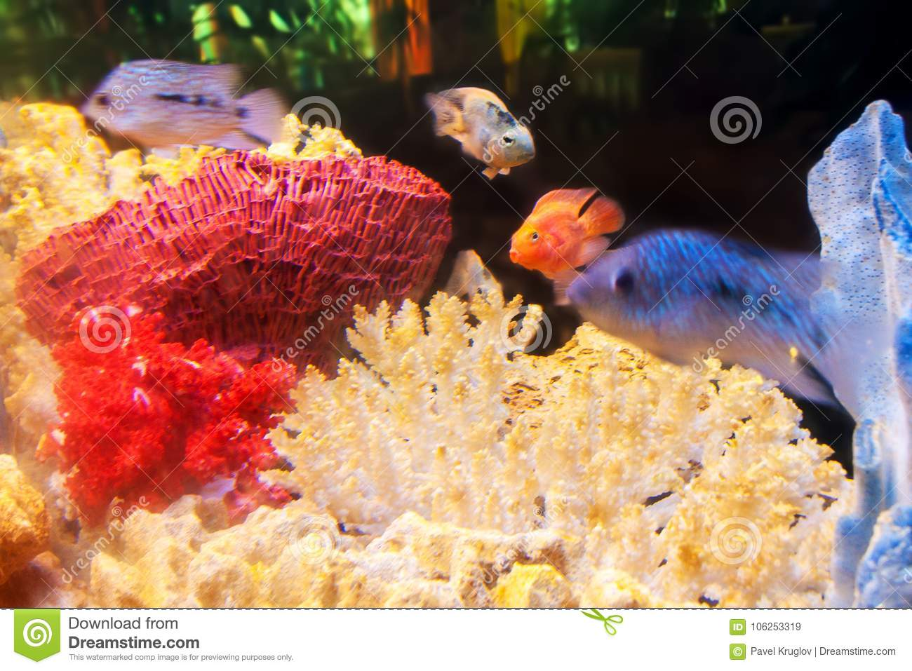 A Home Aquarium With Exotic Fishes And Multicolored Corals Stock ...
