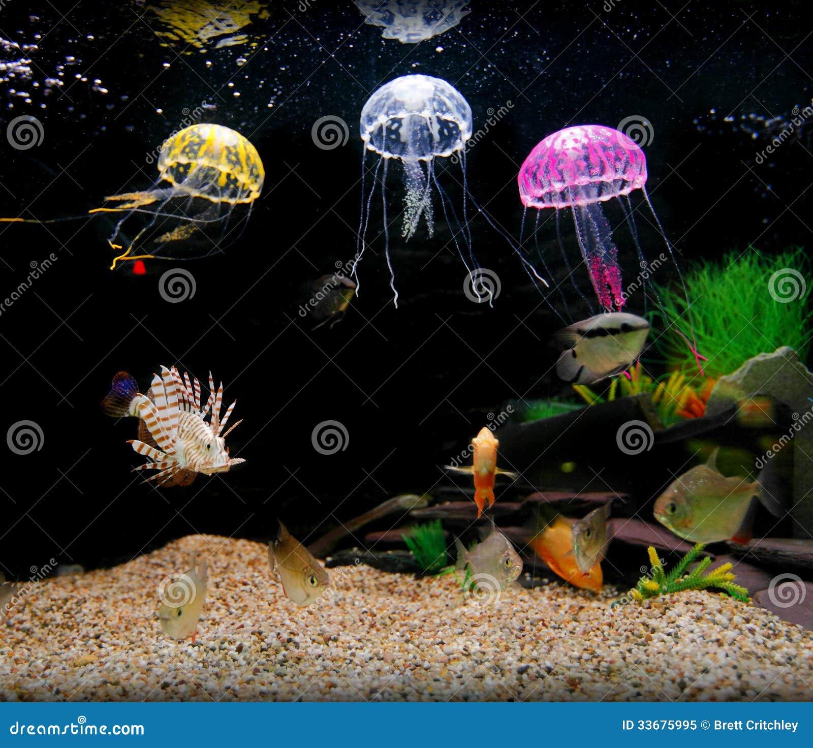 Fish aquarium for home - Home Aquarium Tank Royalty Free Stock Photo