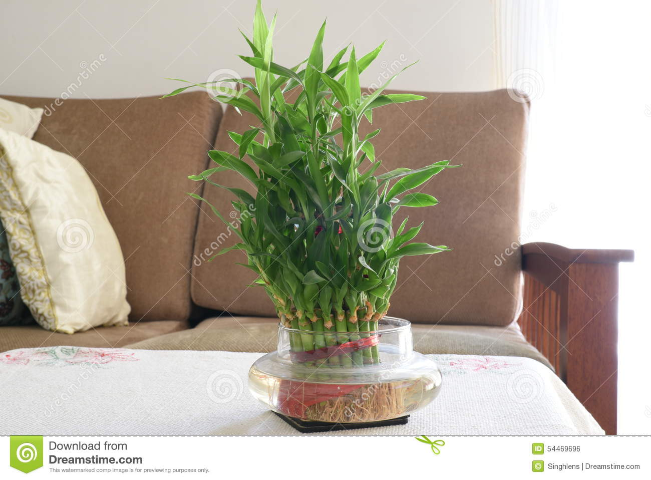 Home Bamboo water plant, green leaves bamboo plant in living room