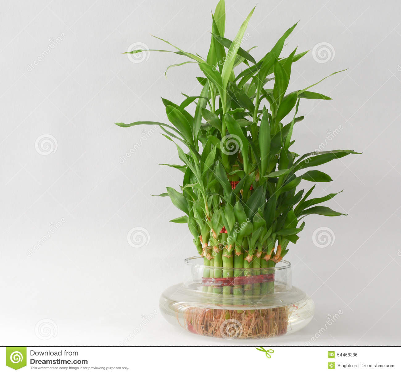 Bamboo Plants In Water