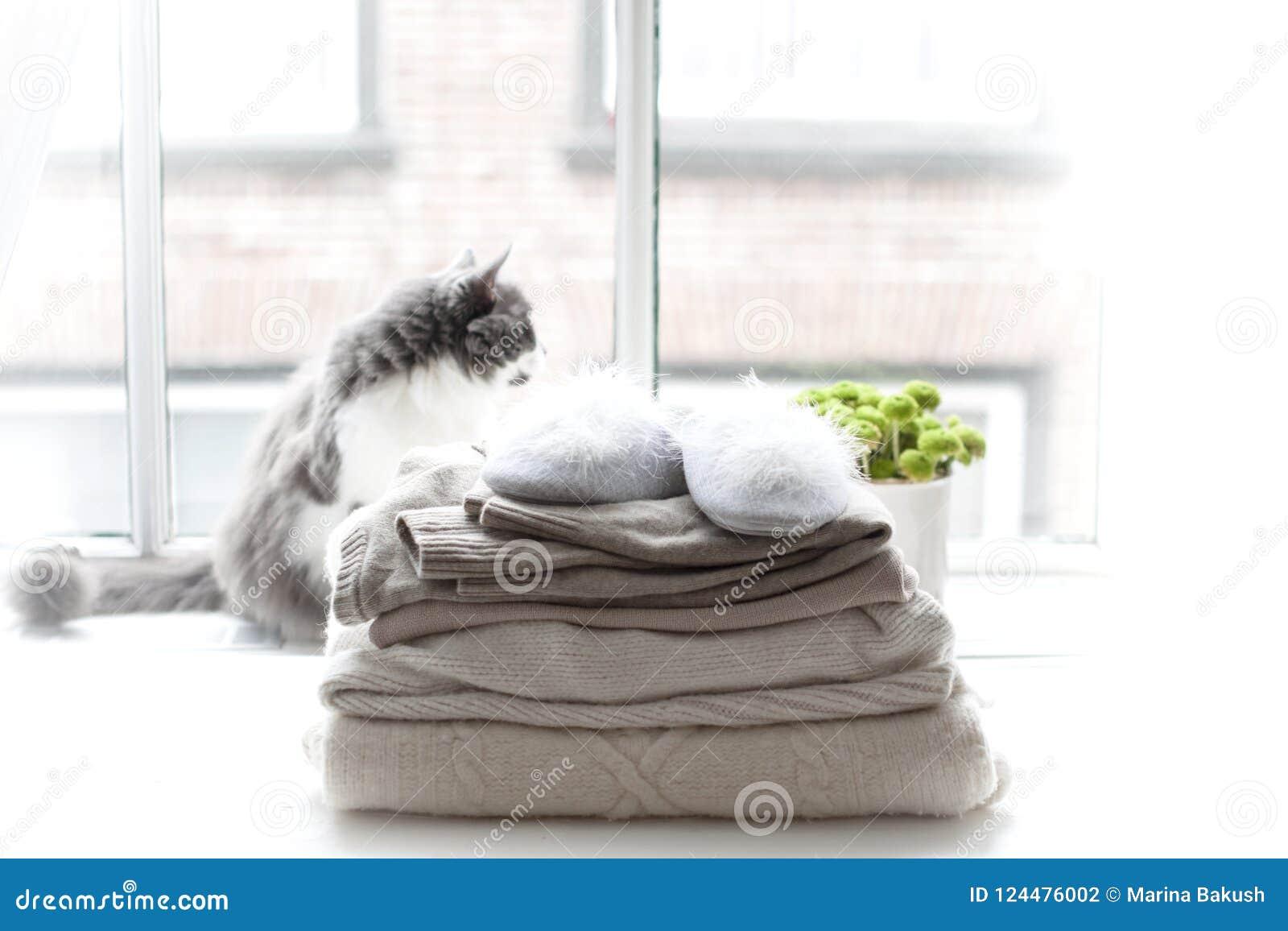 Home Cat On The Window ff9ec6934