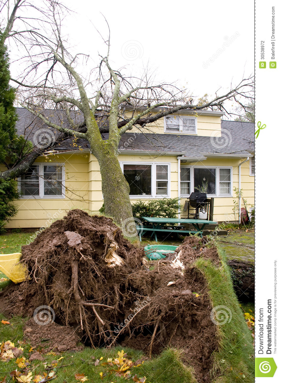 Home Damage Caused Fallen Tree Stock Photography Image