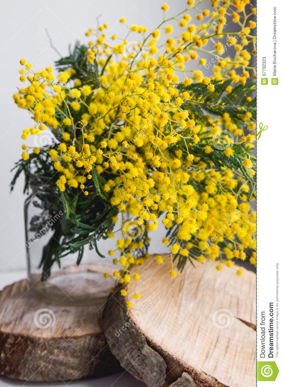 Home Decor, Brunch Of Beautiful Mimosa Yellow Spring Flowers In ...