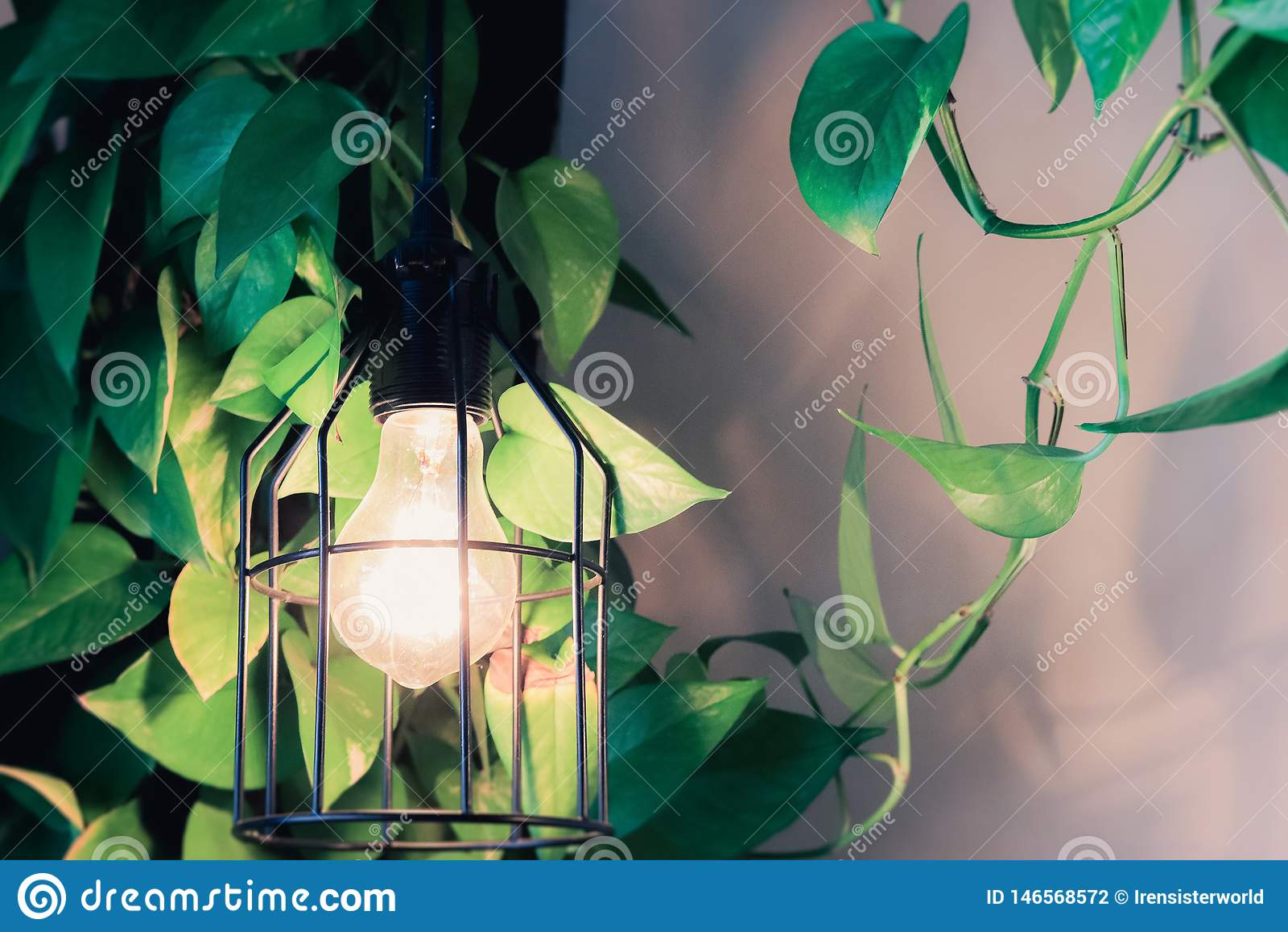 Home decoration botanic style