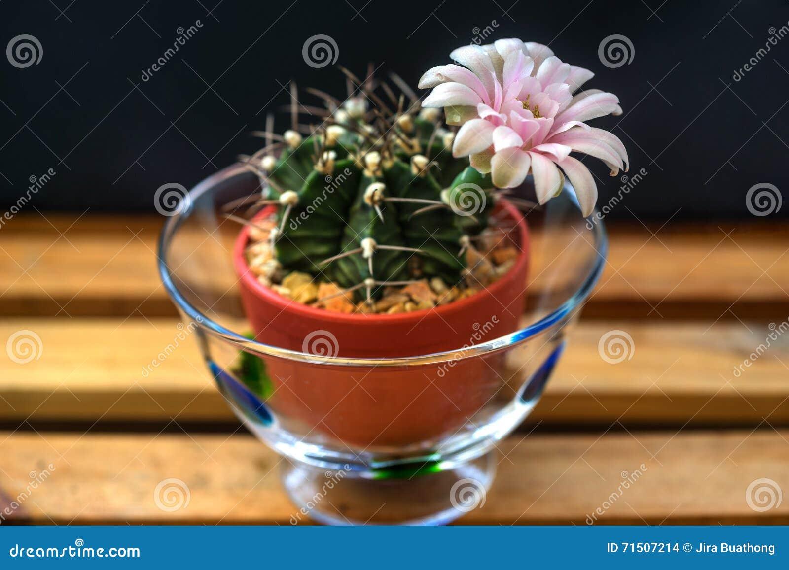 home decoration of cactus flower stock photo image 71507214. Black Bedroom Furniture Sets. Home Design Ideas