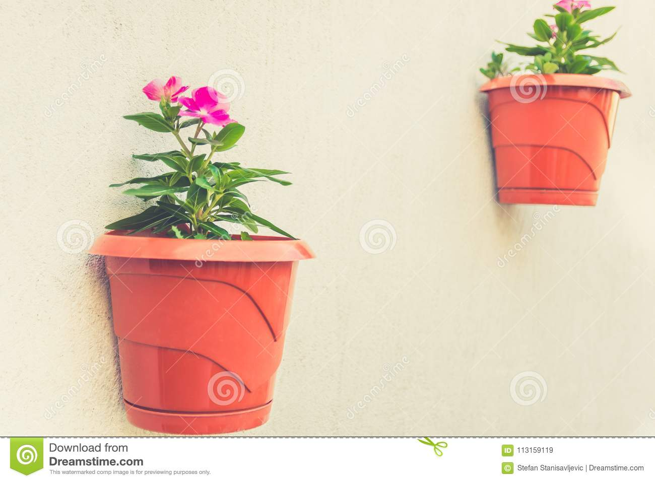 Home Decoration Ideas, Garden On A Wall Stock Image - Image of hang ...