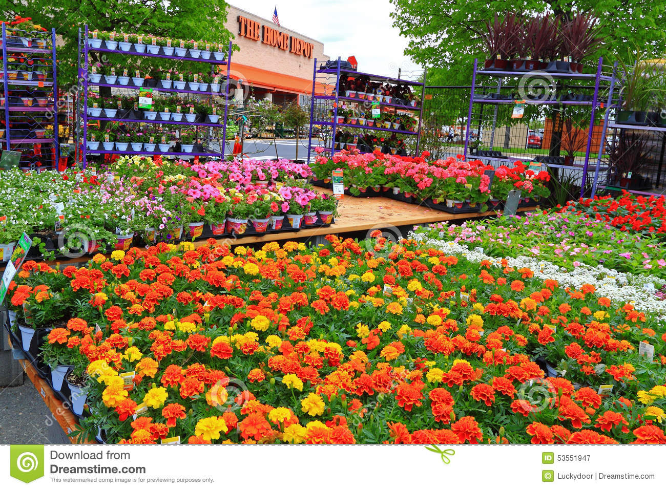 Home depot nursery editorial photography image of plants for Home depot jardineria