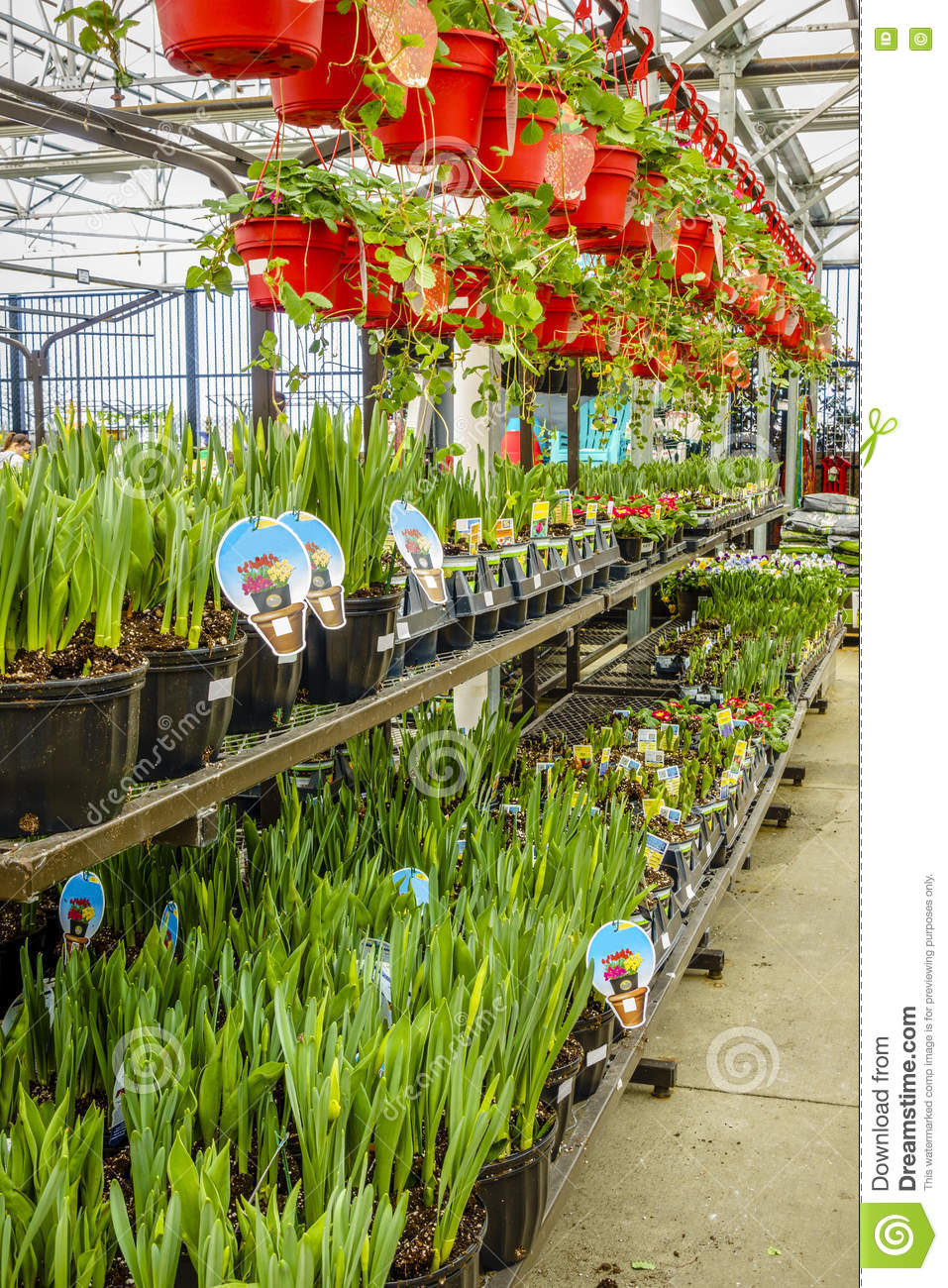 Home And Garden Store In Spring Stock Image Image Of Flowers