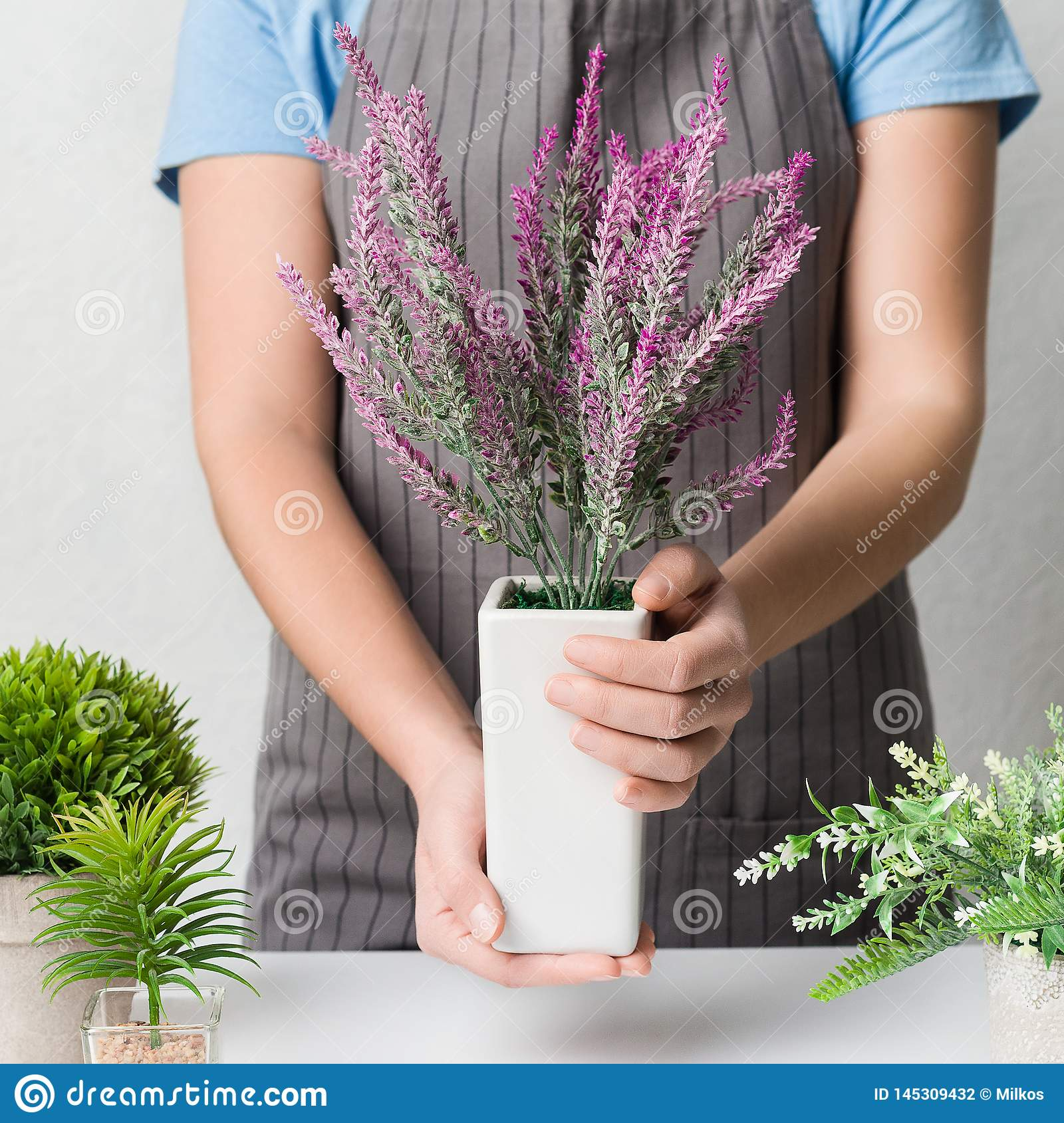Home garden. Woman transplanting lavender plant in white pot