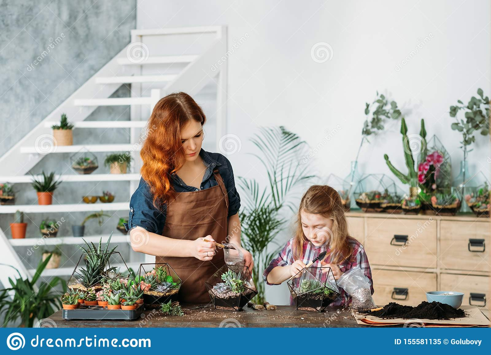 Home Business Growing Succulents Planting Stock Image Image Of