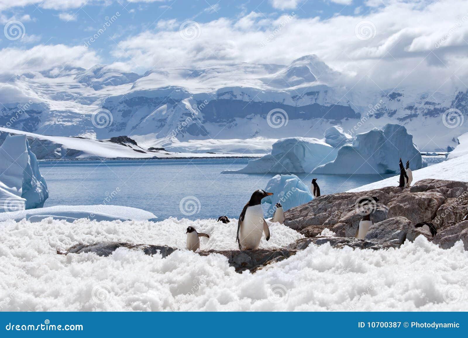 HOME mágica dos pinguins