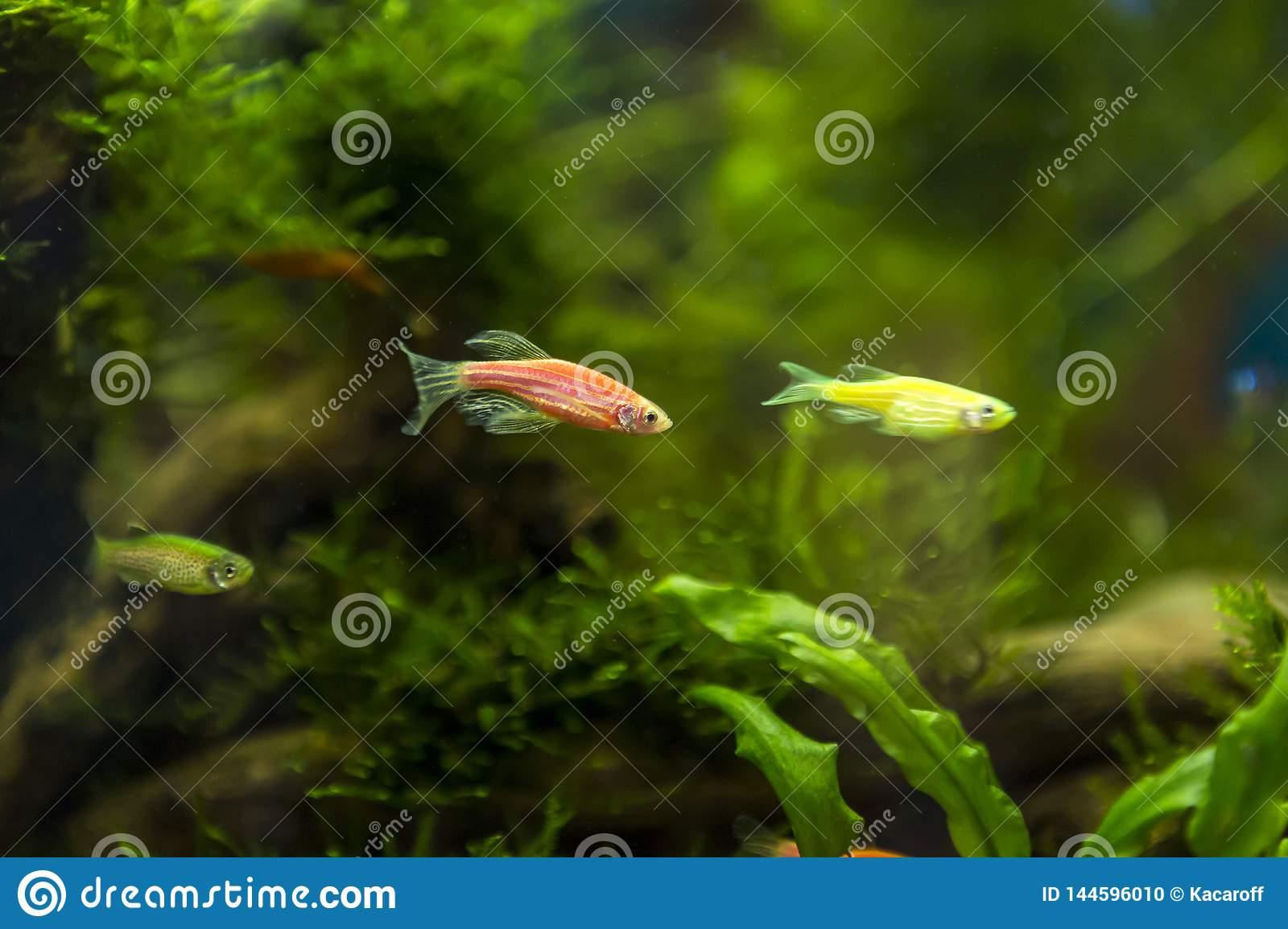 Home-made Aquarium With Small Flower Fish Against The Backdrop Of
