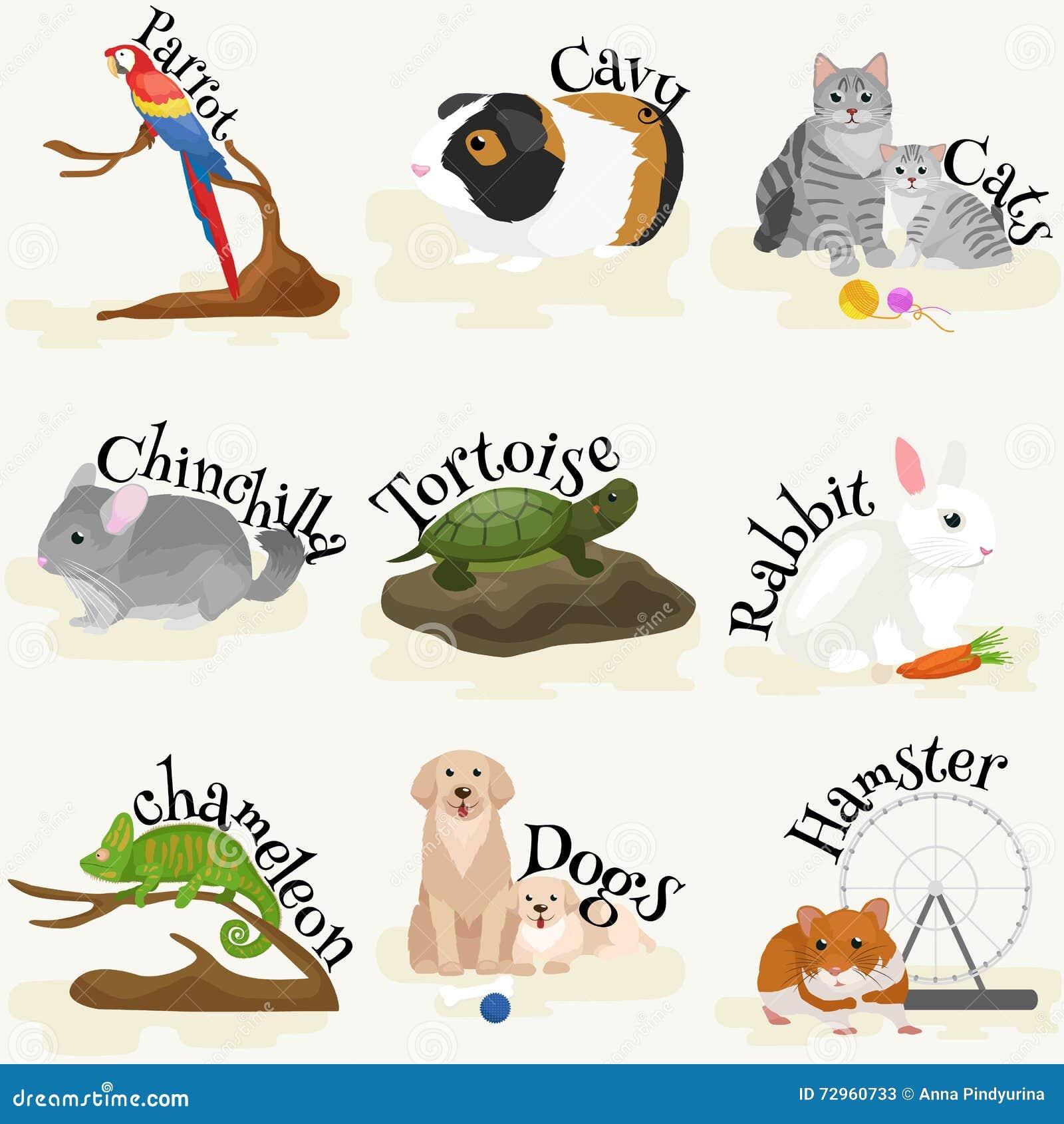 vector pets illustration cute set white background cat dog fish hamster flat design vector. Black Bedroom Furniture Sets. Home Design Ideas