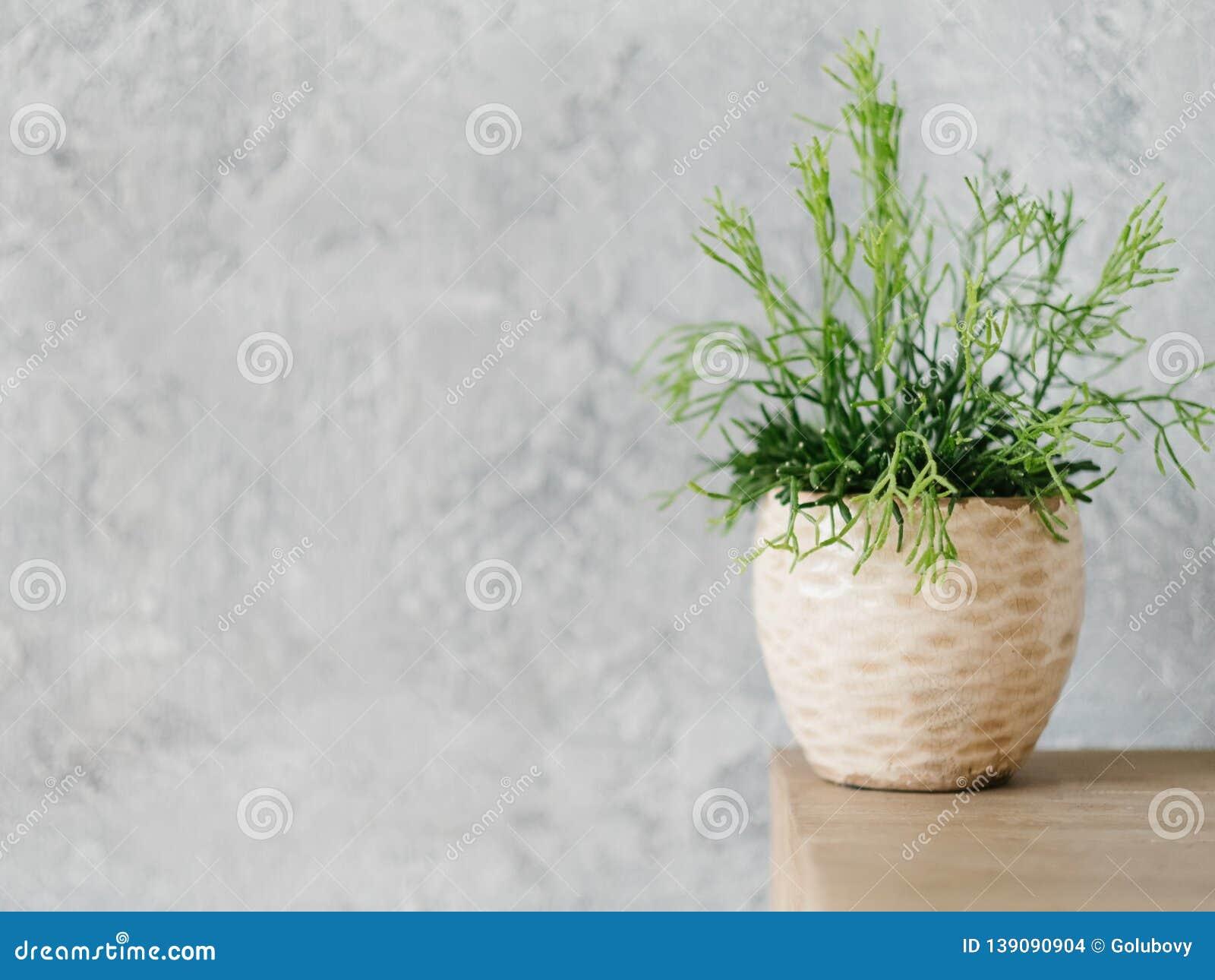 Home plant decor design flowerpot houseplant