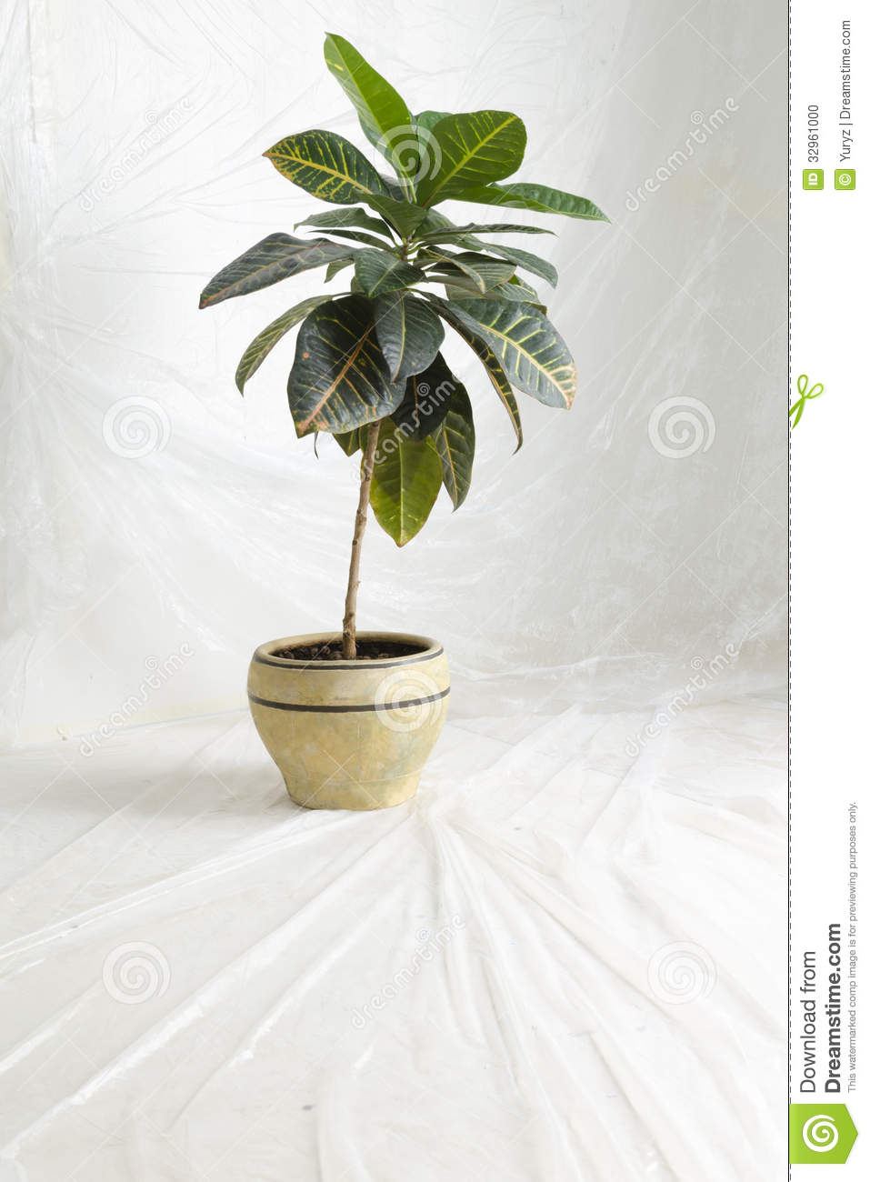 Home plant stock photo image of thin window green for Green floor plant