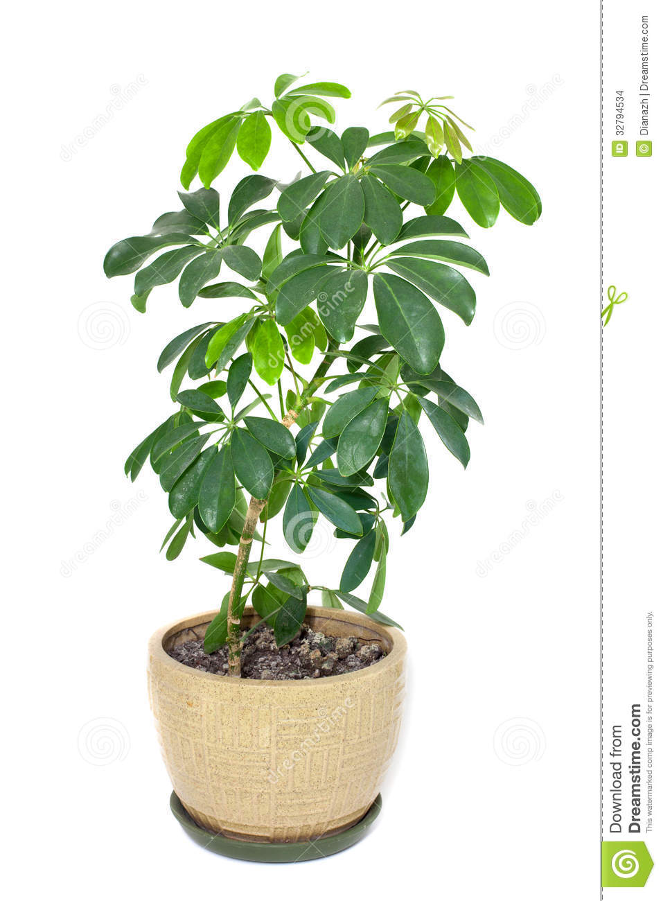 Home plant in a pot stock images image 32794534 - Plants in home ...