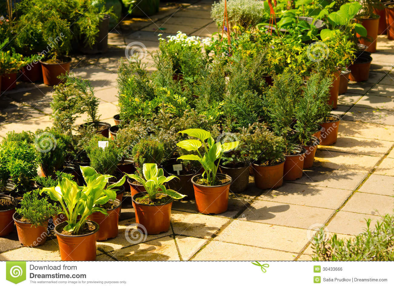 Home Plants For Sale Royalty Free Stock Image Image