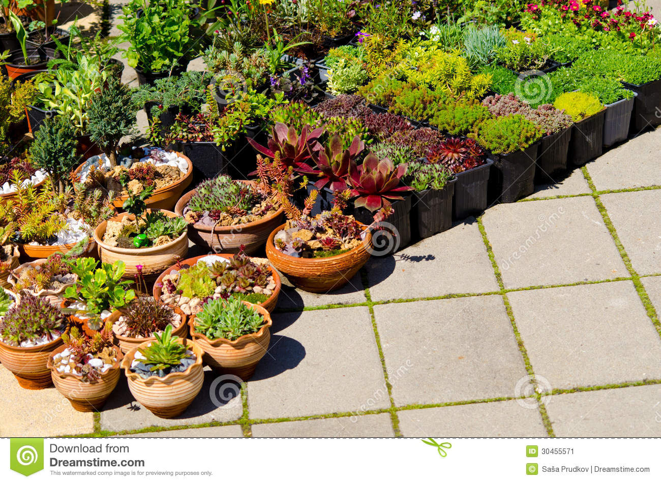 Home Plants For Sale Stock Image Image 30455571