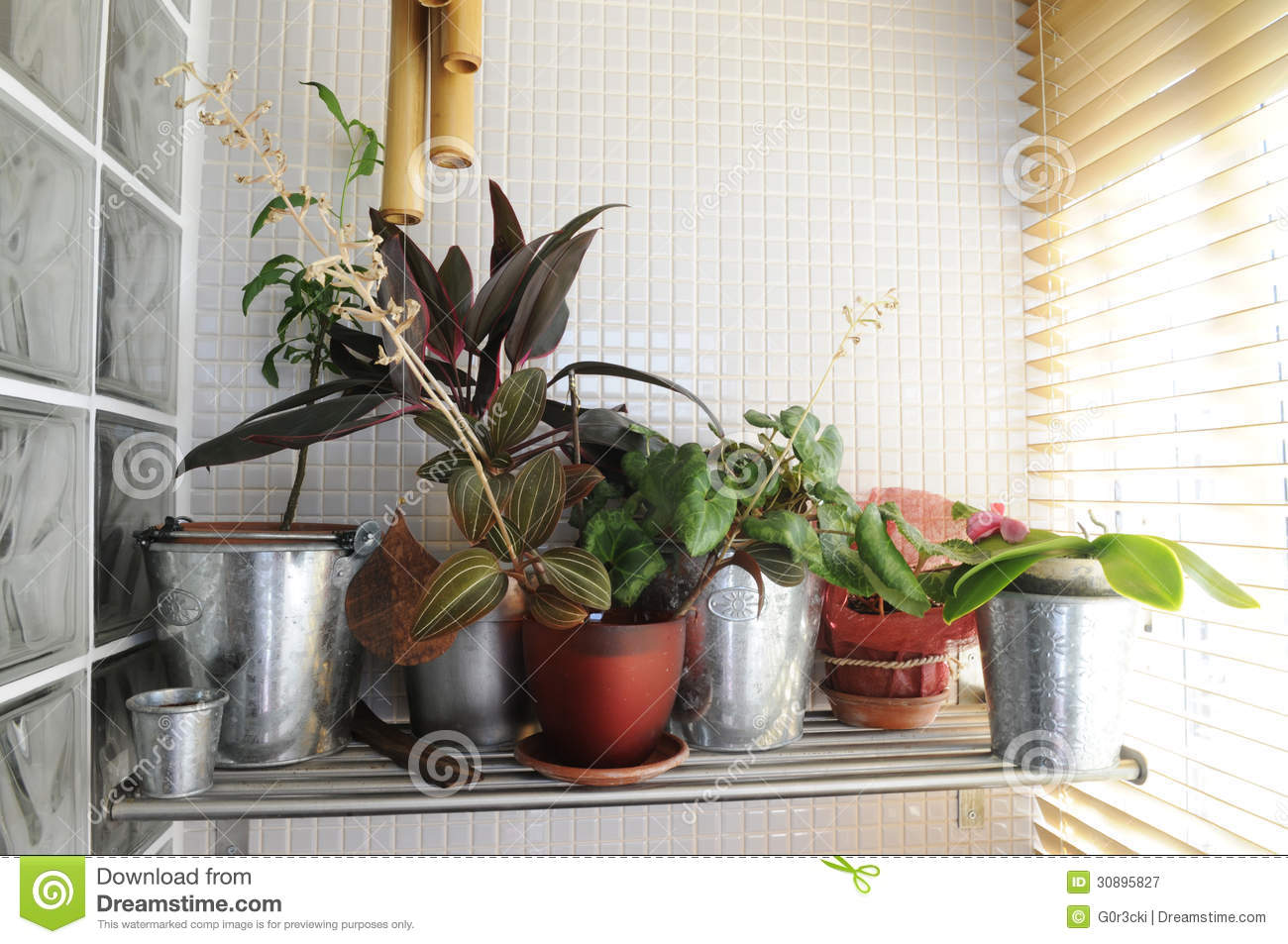 Home Plants By The Window Sunny Interior Stock Image Image Of Bamboo Ornamentals 30895827