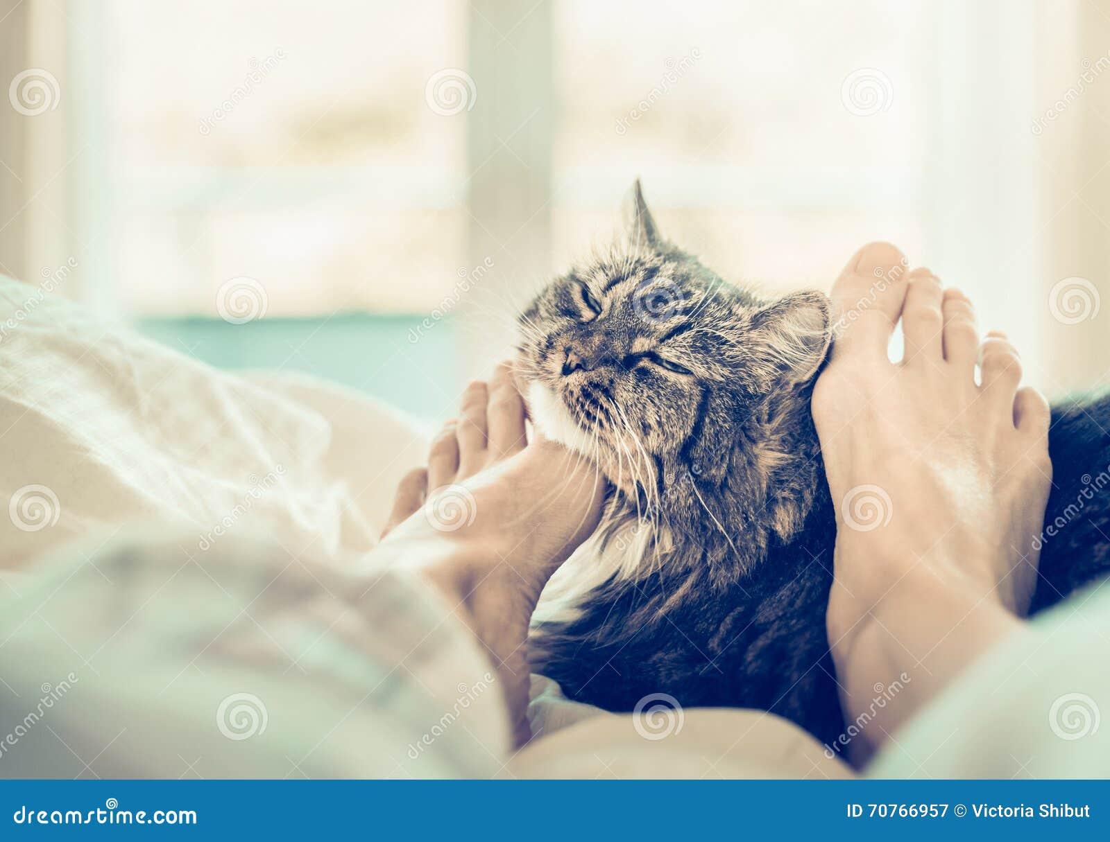 Indoor Cat Scratching Neck