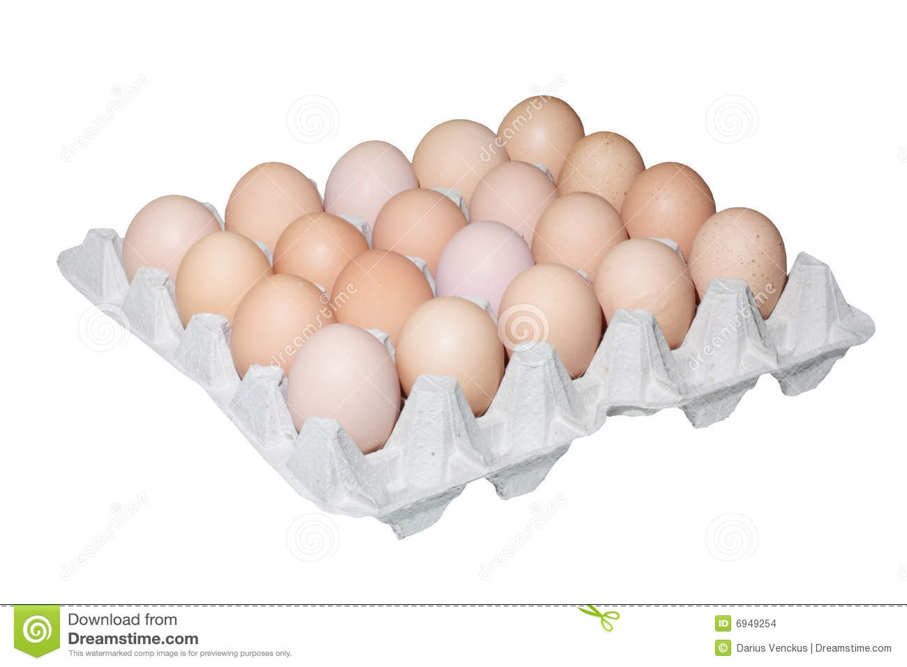 """chicken egg essay He tackles the chicken-and-egg problem in """"which came first,"""" one of the  philosophical essays in his book, the art of knowing a literal."""