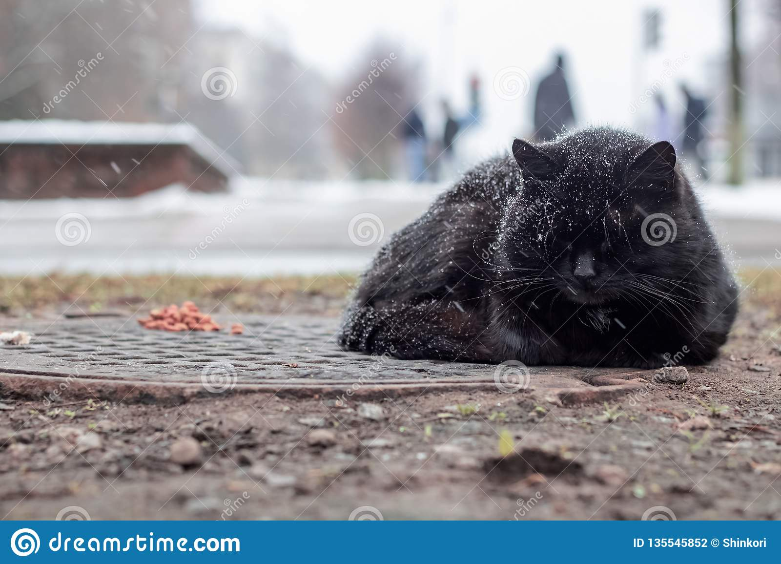 Homeless black cat sleeping under the snow