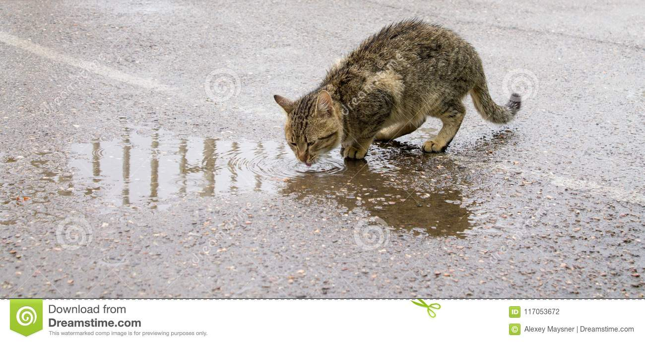 Homeless cat is drinking water