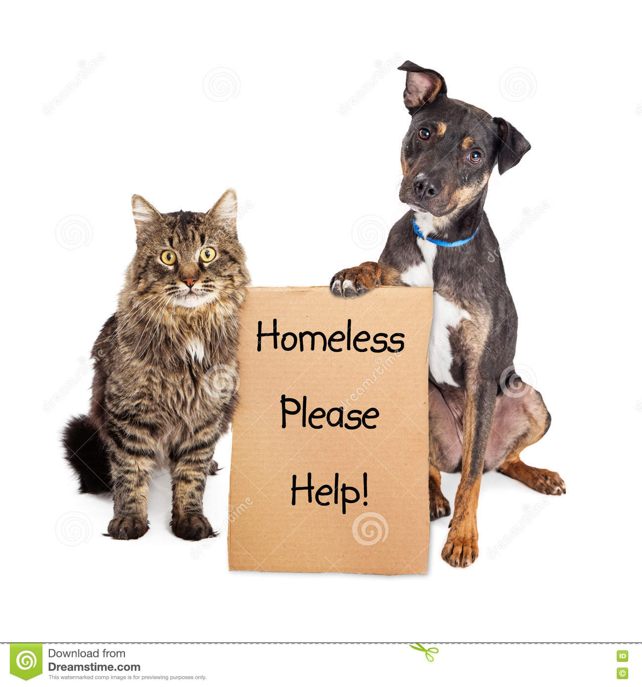 Homeless Dog And Cat With Sign Stock Image