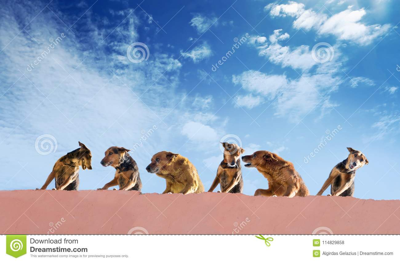 Homeless dogs gang on a roof of a concrete house on a blue sky b