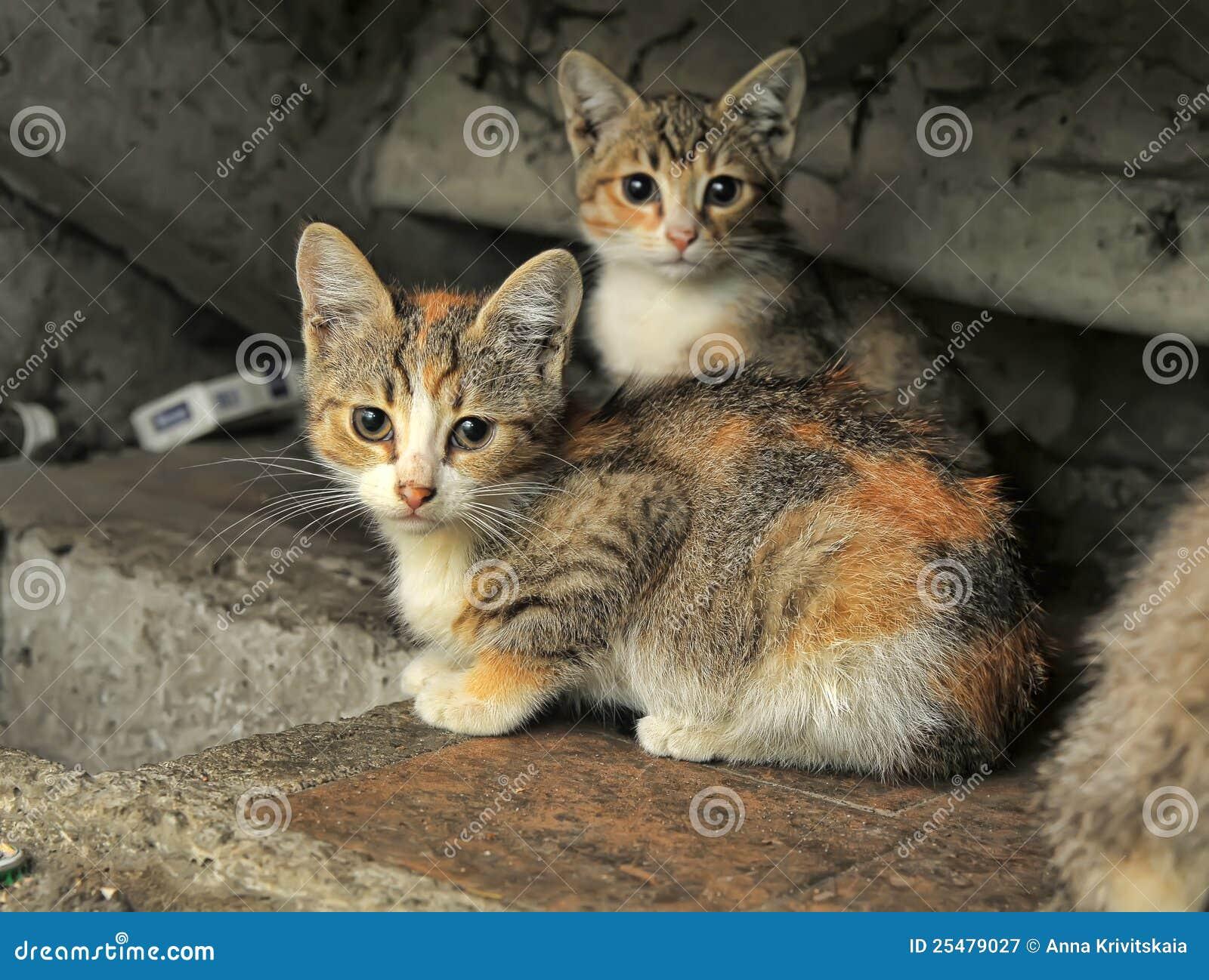 2 black beautiful kittens very very sexy s amp s - 2 9