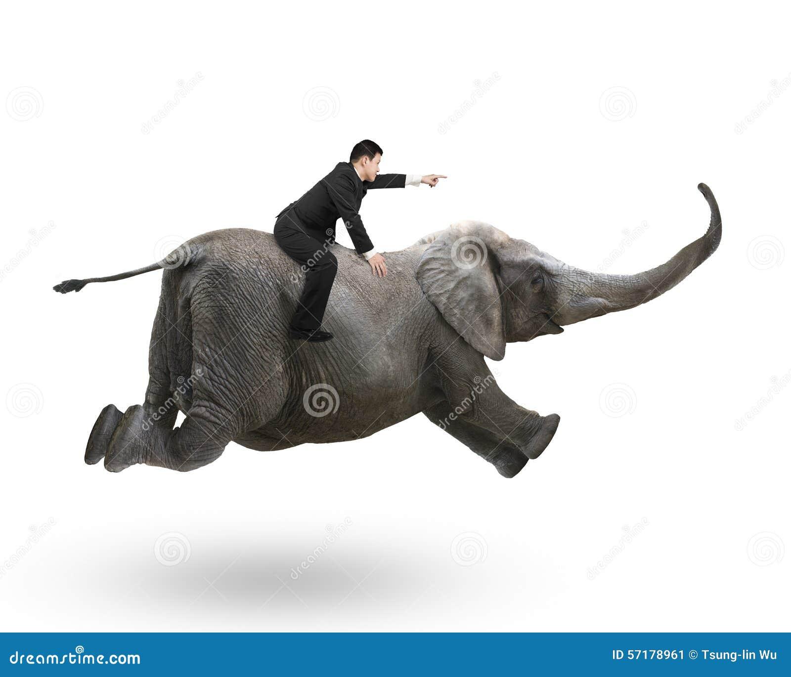 Homem de negócios com apontar a equitação do gesto do dedo no elefante