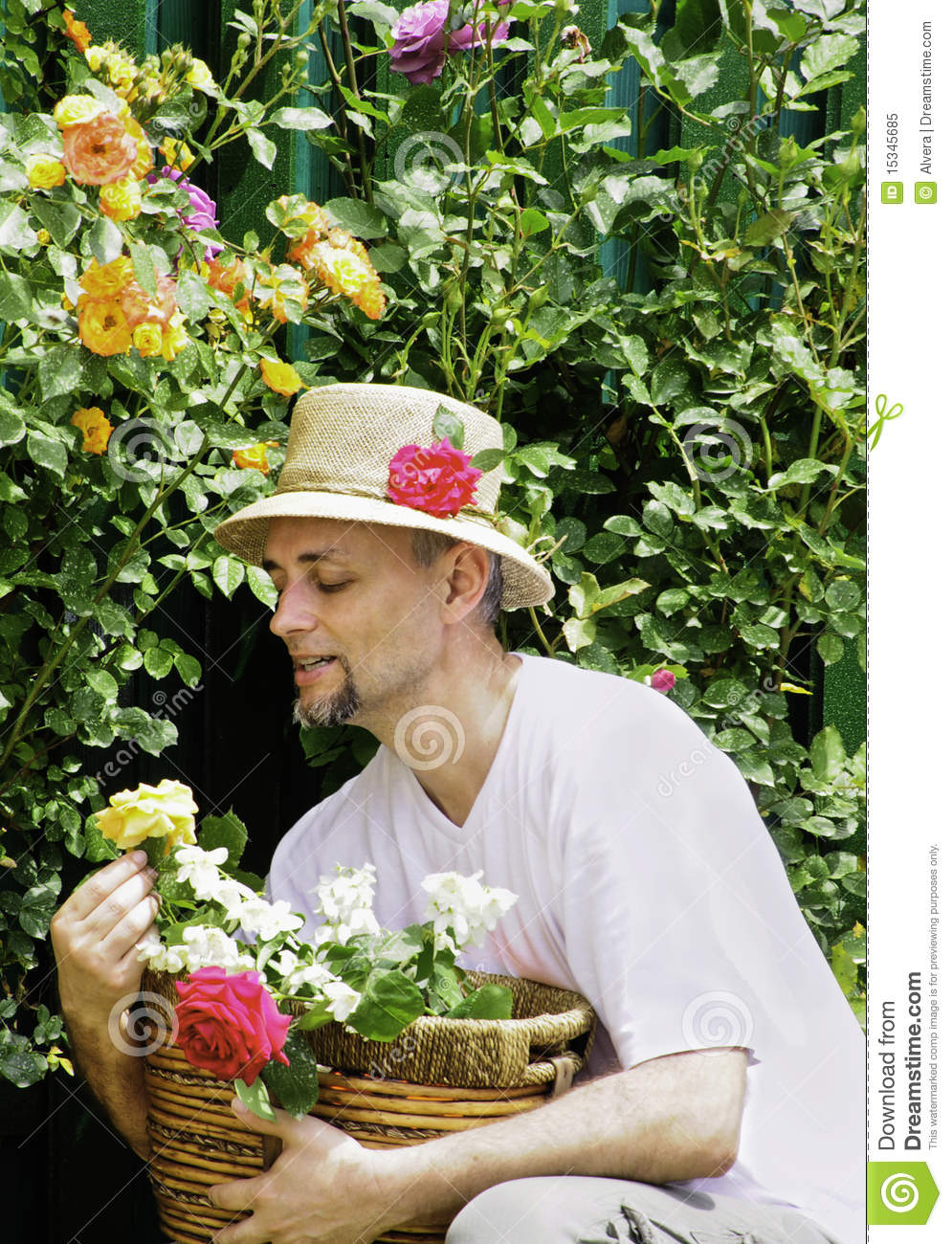 Foto de Stock Royalty Free Man in garden picking roses Imagem