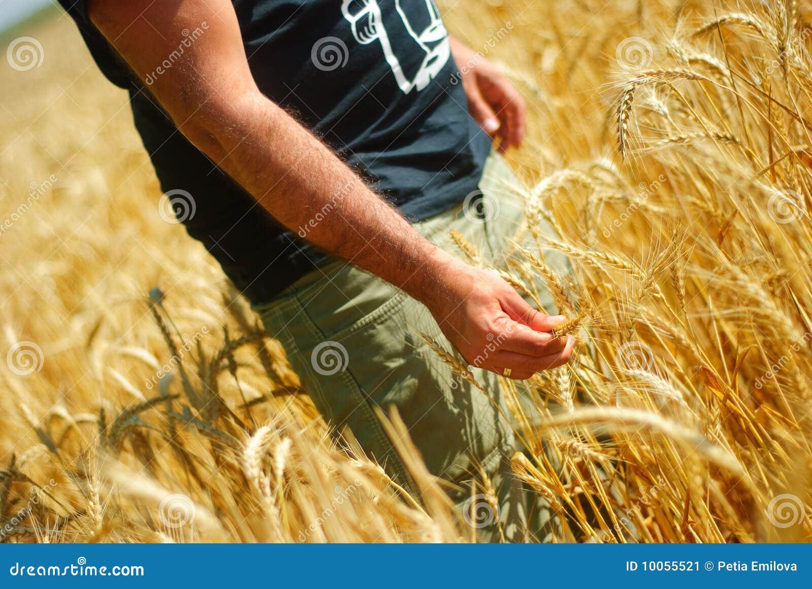 Homem no corn-field