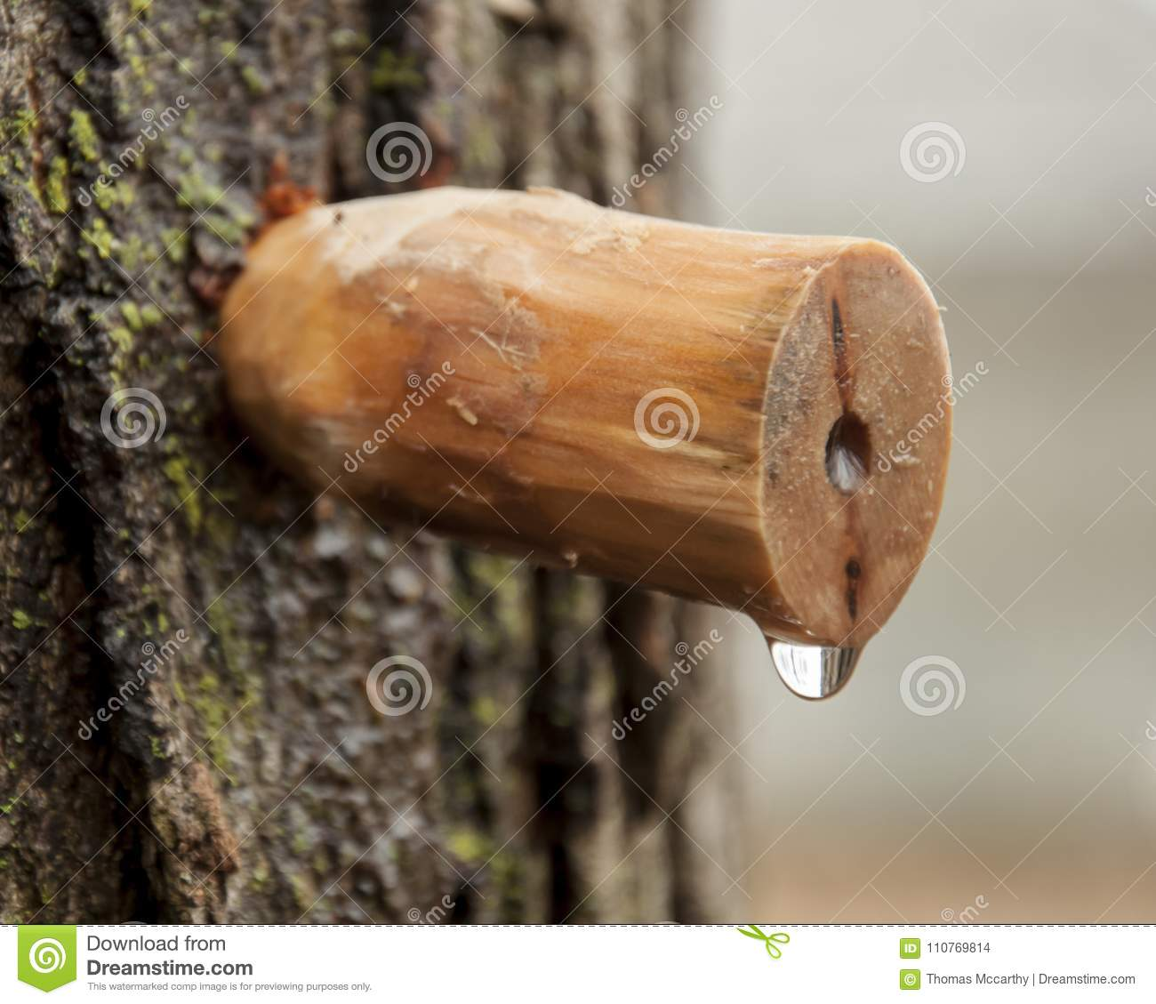 Homemade carved wooden spile to tap maple tree for sap to make maple syrup